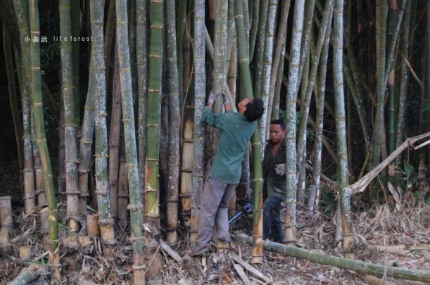 bamboo2a