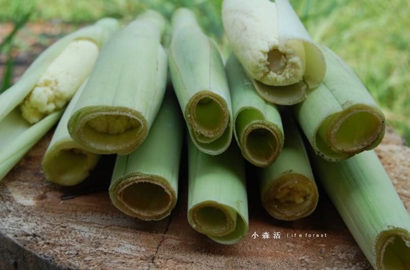 sugarcaneflower4